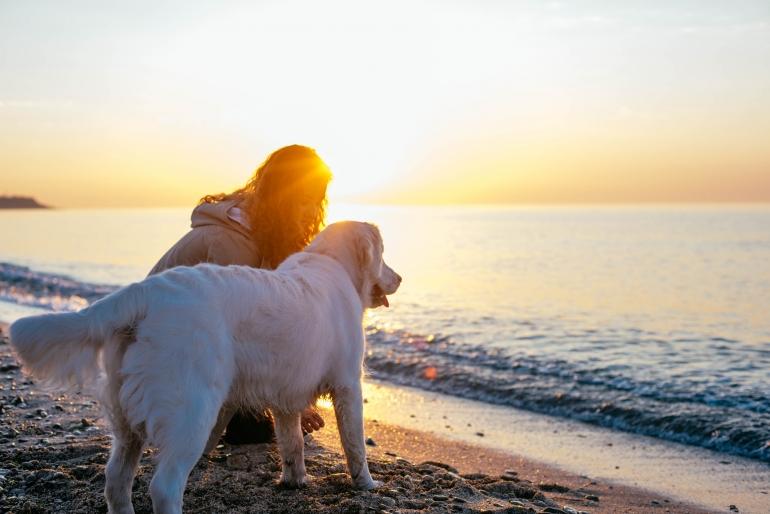 hv_chien_guide_plage.jpg